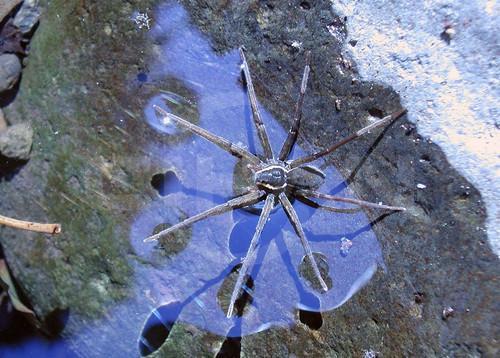 Yepyeni Bir Örümcek Türü Bulundu!