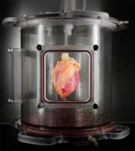 heart1 Deri Hücresinden İnsan Kalbi Deri Hücresinden İnsan Kalbi! heart1 268x300
