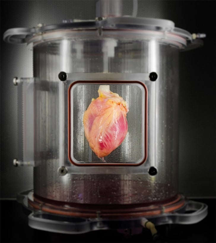 Deri Hücresinden İnsan Kalbi!