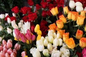 En Hızlı Şekilde Çiçek Gönderimi en hızlı Şekilde Çiçek gönderimi En Hızlı Şekilde Çiçek Gönderimi cicek resimleri 7 1024x682 300x200