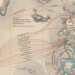 Dünya İnternet Haritası